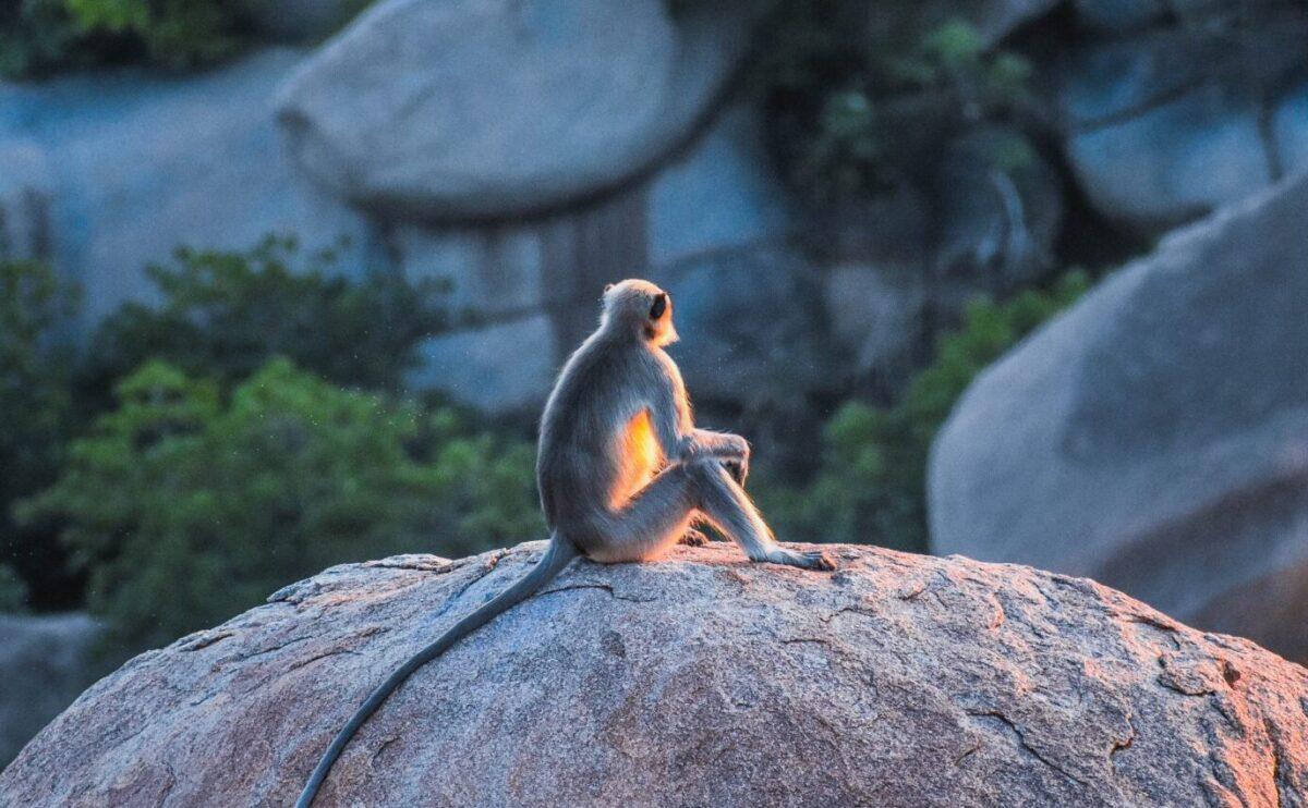 monkey sitting on big rock during daytime
