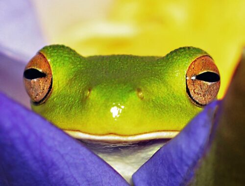 close view of green frog on purple flower