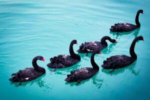 swan floating on sea